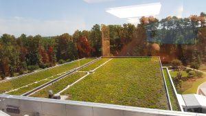 green roof at SAS (1)