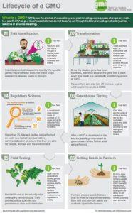 GMO Process