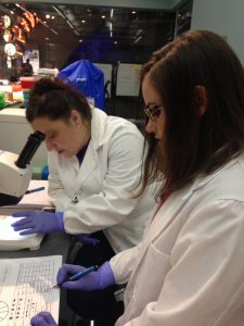 They are hard working teachers looking for bacteria.