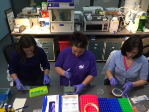 The three musketeers are plating bacteria! We are working on real science studies about Green Roofs!