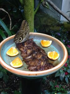 This was the biggest butterfly I saw in the Butterfly Exhibit!