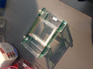 Look at OUR electrophoresis gel!!! We made this!!!