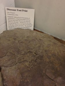 I can't believe that they have a sample of a dinosaur footprint.